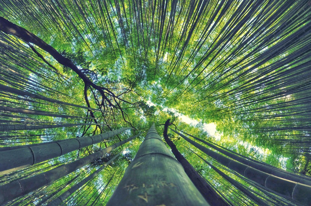 https://partidorepublicanodechile.cl/wp-content/uploads/2020/07/bamboo-milky-way-arashiyama_t20_yRGzl0.jpg